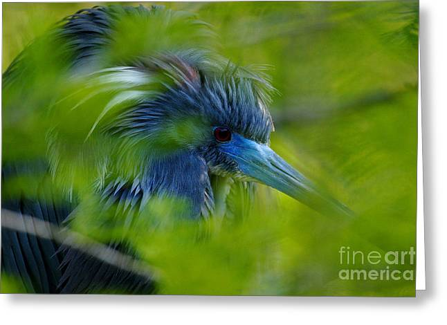 Greeting Card featuring the photograph Tri-colored Heron Concealed    by John F Tsumas