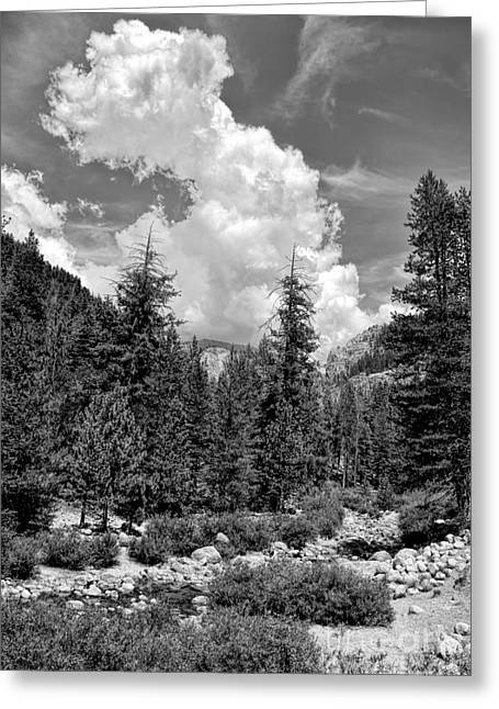 tribute to Ansel Adams Greeting Card by Peggy Hughes