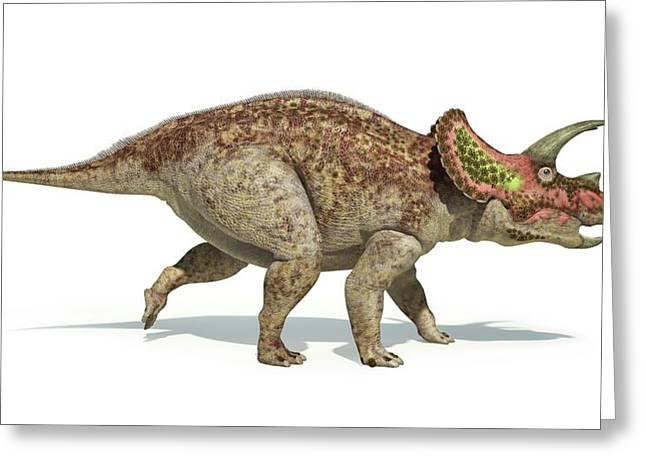 Triceratops Dinosaur Greeting Card