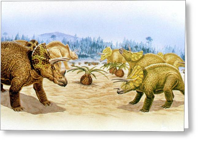 Triceratops Dinosaurs Greeting Card