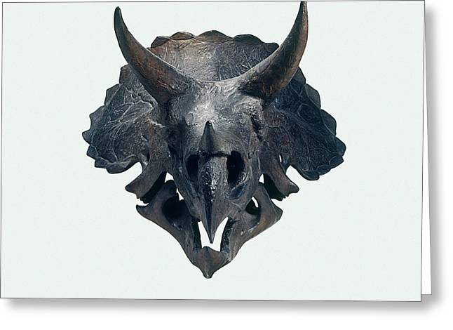 Triceratops Skull Greeting Card