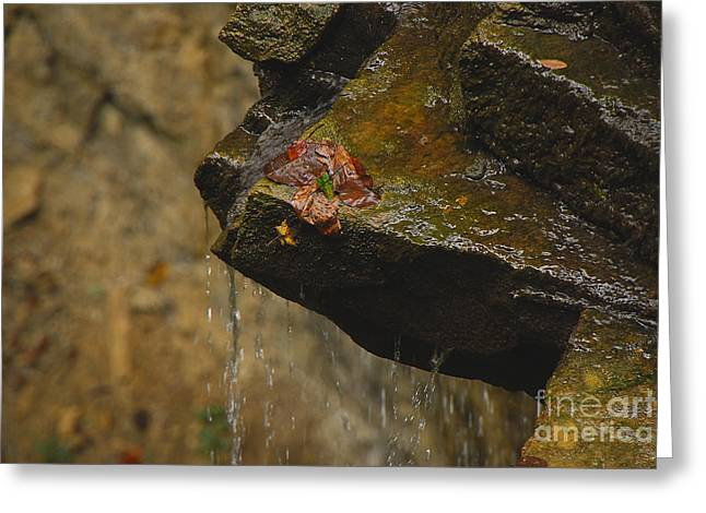 Trickling Water Greeting Card by Mary Carol Story