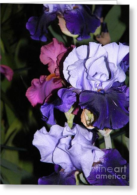 Tricolor Night Blossoms Greeting Card