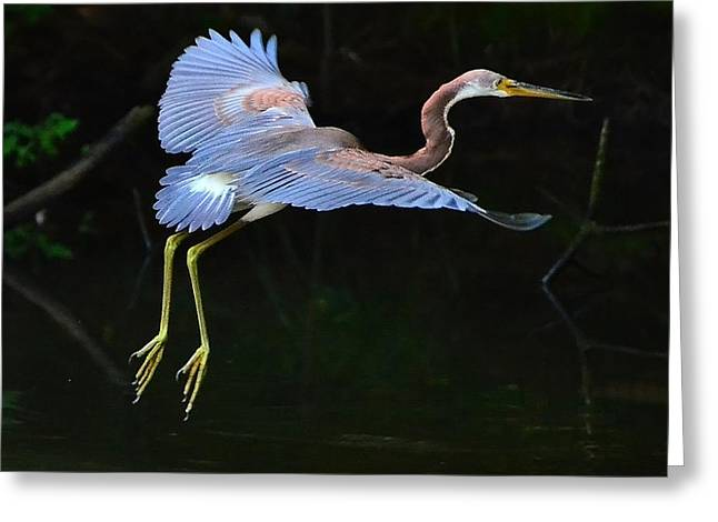 Greeting Card featuring the photograph Tricolored Heron by Charlotte Schafer