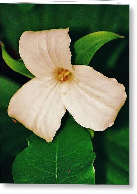 Greeting Card featuring the photograph Trillium by Daniel Thompson