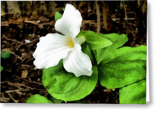 Trillium In The Woods Greeting Card by Michelle Calkins