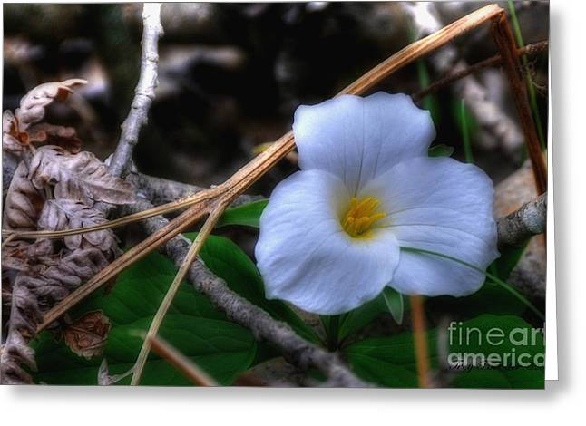 Greeting Card featuring the photograph Trillium On County C by Trey Foerster