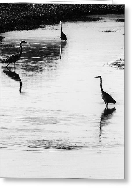 Greeting Card featuring the photograph Trilogy - Black And White by Belinda Greb