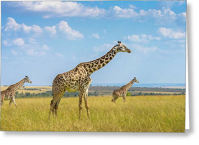 Trio Giraffes Greeting Card