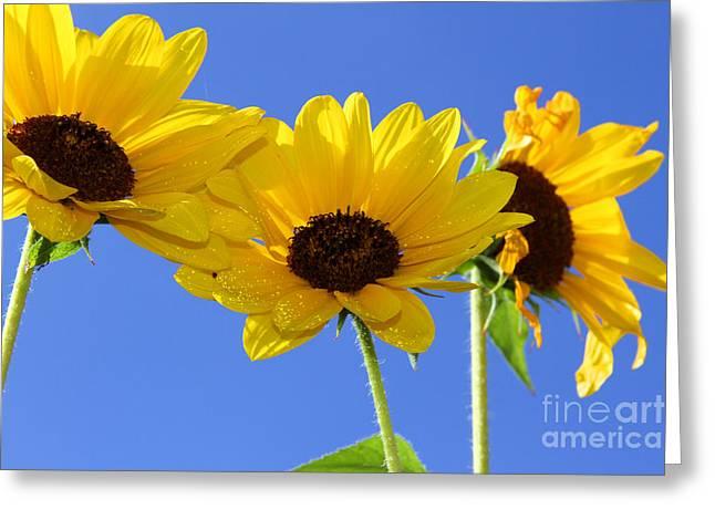 Trio In The Sun - Yellow Daisies By Diana Sainz Greeting Card