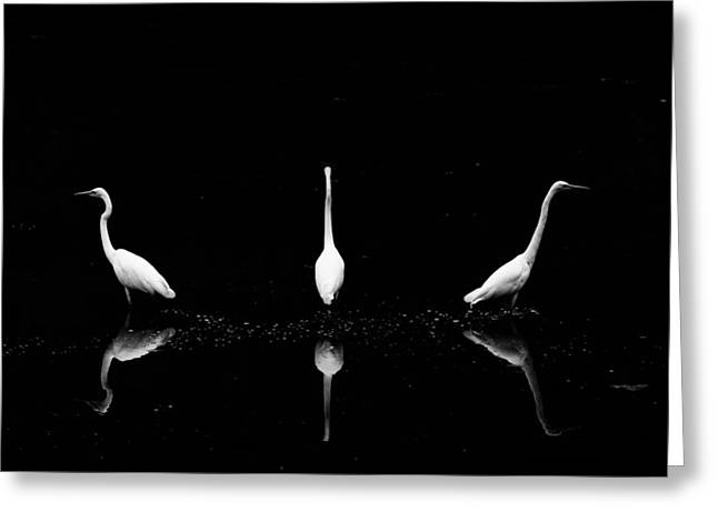 Trio Of Egret Greeting Card by Yoshinori Matsui