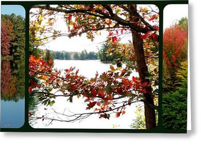 Trio Of Triumphant Color Greeting Card