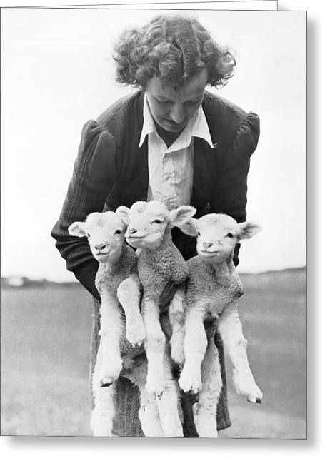Triplet Lambs Greeting Card by Underwood Archives