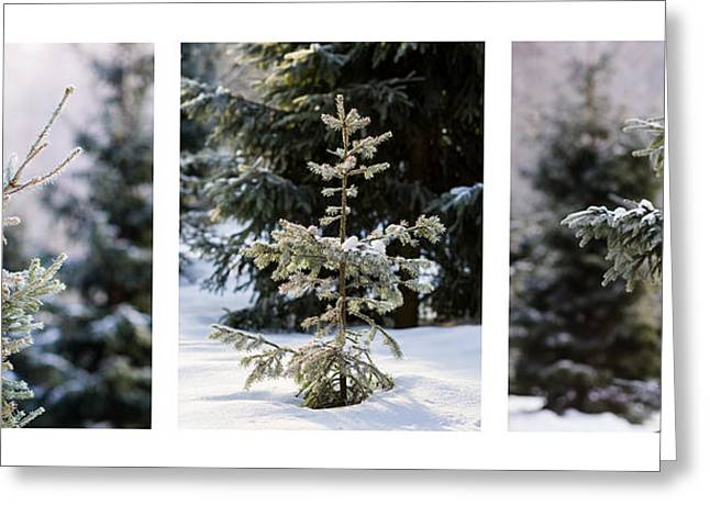 Triptych - Christmas Trees In The Forest - Featured 3 Greeting Card by Alexander Senin