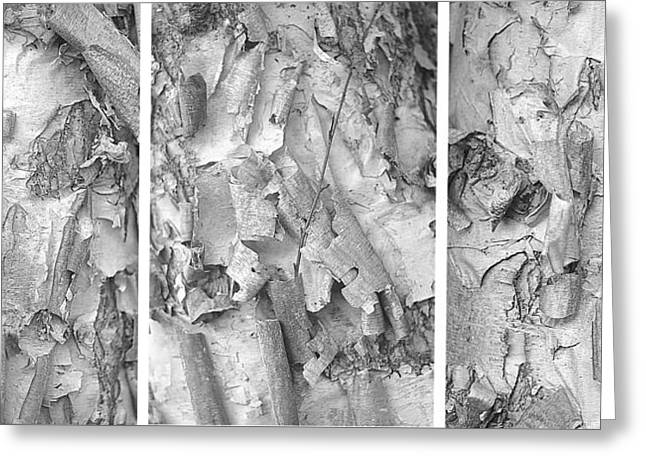 Triptych Of Curling Tree Bark In Black And White With A White Background Greeting Card
