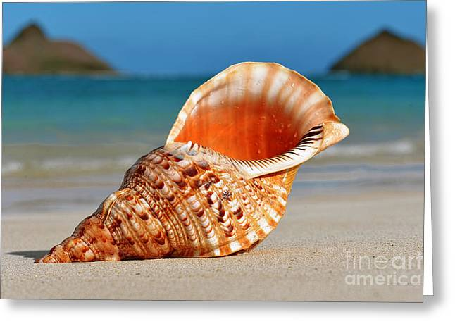 Tritan Trumpet On Lanikai Beach Greeting Card