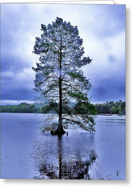 The Healing Tree - Trap Pond State Park Delaware Greeting Card