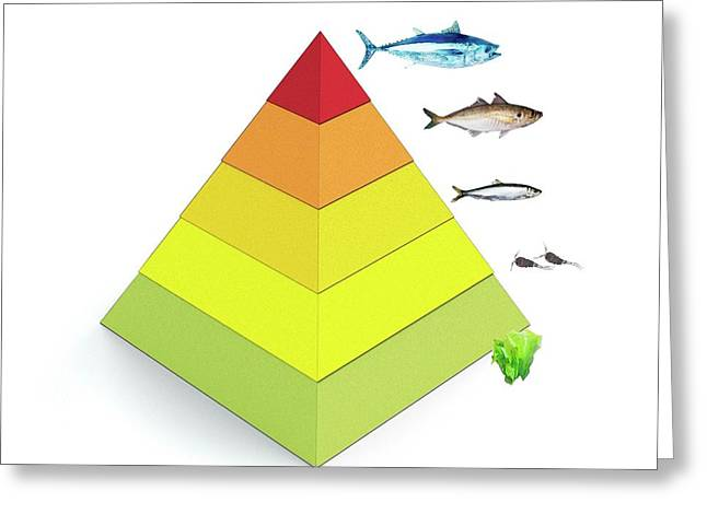 Trophic Levels In The Sea Greeting Card