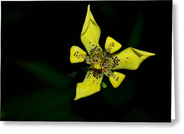 Tropic Yellow Greeting Card by Miguel Winterpacht