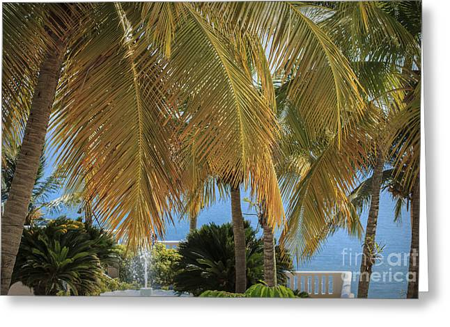 Tropical Afternoon Greeting Card by Mary Lou Chmura
