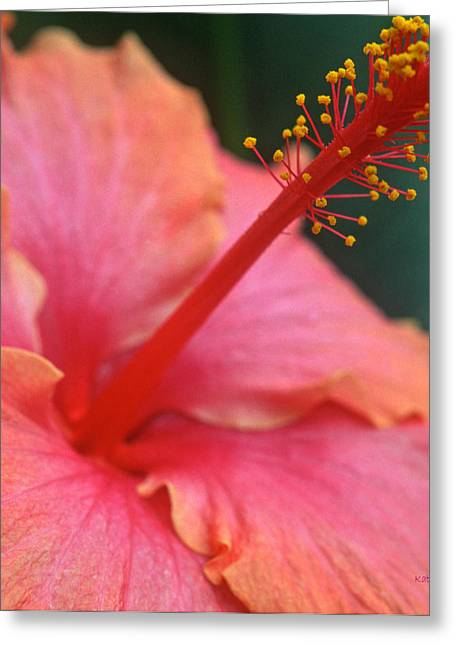 Tropical Beauty Greeting Card by Kathy Yates