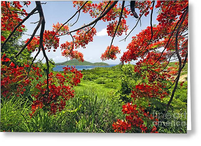 Tropical Bloom Greeting Card by George Oze