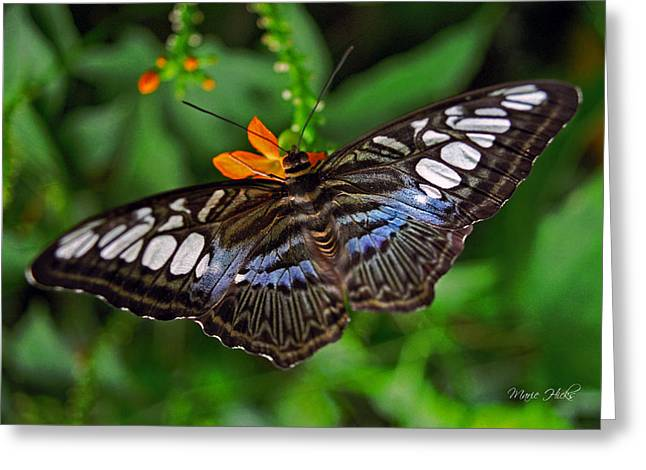 Greeting Card featuring the photograph Tropical Butterfly by Marie Hicks