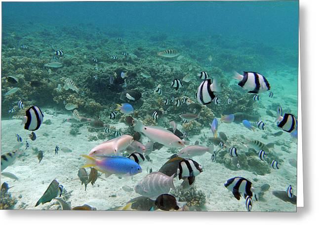 Tropical Fish, Malolo Lailai Island Greeting Card