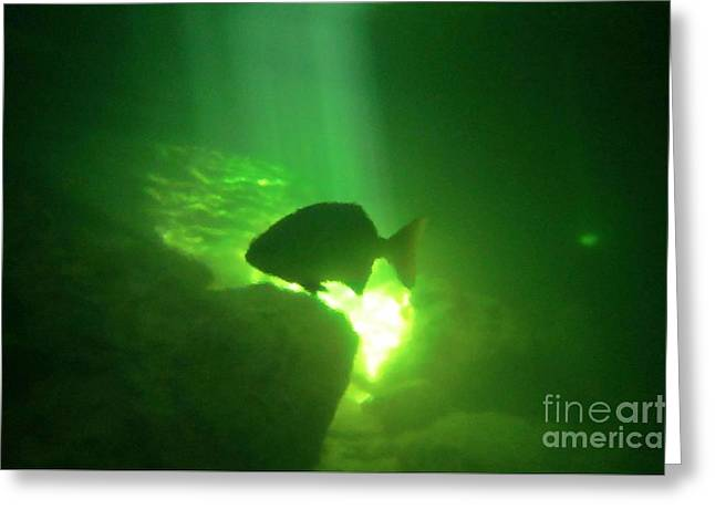Tropical Fish Shilouette In A Cenote Greeting Card by Halifax photography by John Malone