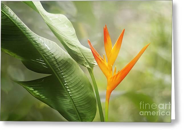 Tropical Flower Greeting Card by Natalie Kinnear