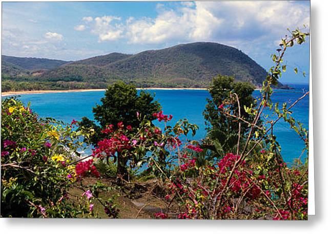 Tropical Flowers At The Seaside Greeting Card by Panoramic Images