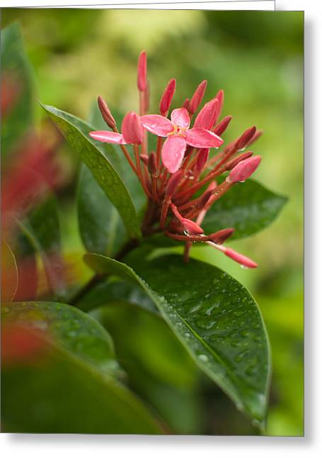 Tropical Flowers In Singapore Greeting Card