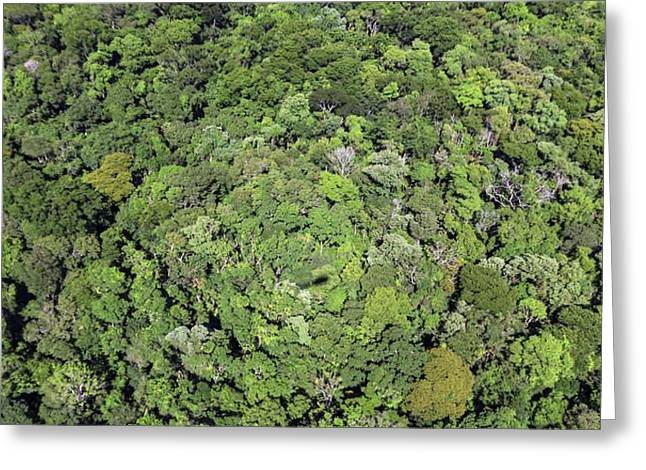 Tropical Forest Near Iguazu Falls Greeting Card by Alfred Pasieka