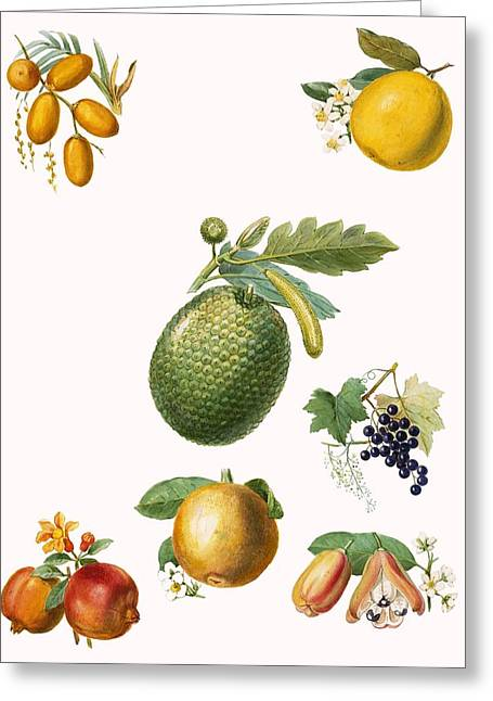 Tropical Fruit Greeting Card by English School