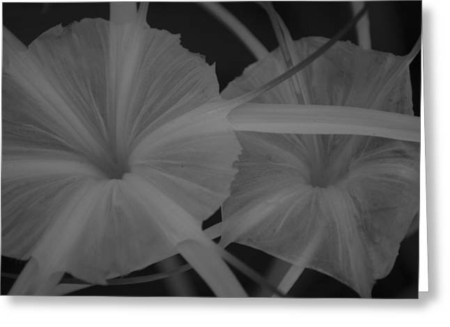Tropical Garden Greeting Card by Miguel Winterpacht