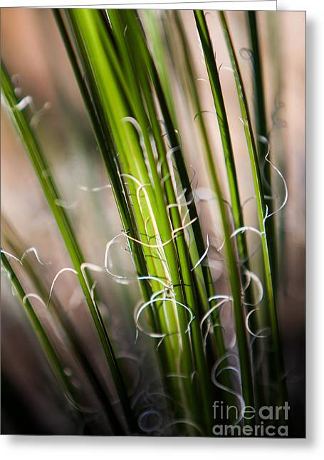 Tropical Grass Greeting Card