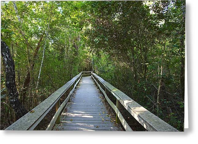 Tropical Hardwood Hammock  Greeting Card by Rudy Umans