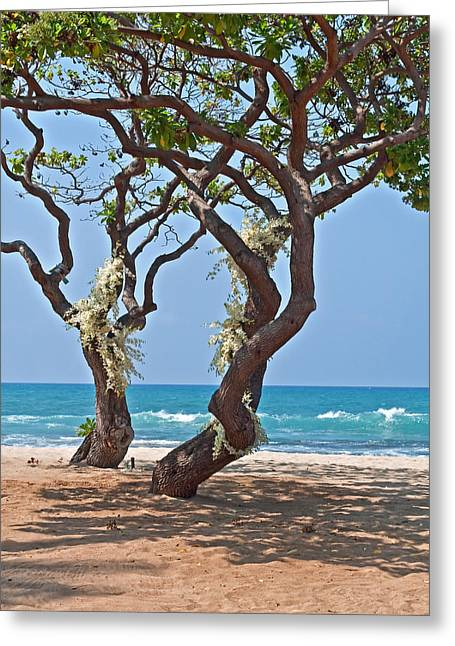 Tropical Heliotrope Trees With White Orchids On Beach Greeting Card