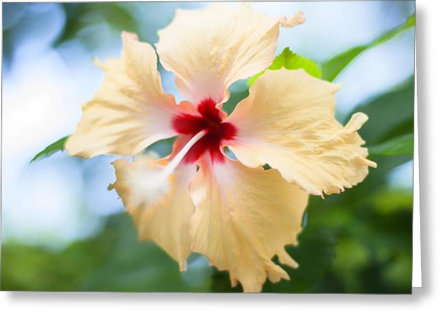 Tropical Hibiscus Greeting Card