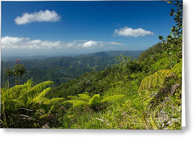 Greeting Card featuring the photograph Tropical Highlands by Jose Oquendo