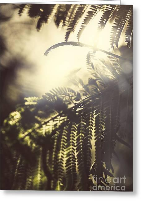 Tropical Jungle Sundown Greeting Card by Jorgo Photography - Wall Art Gallery