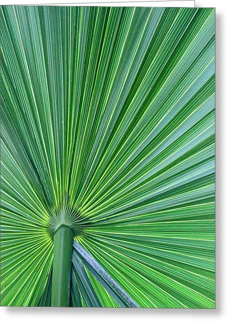 Tropical Leaf Greeting Card by Carolyn Stagger Cokley