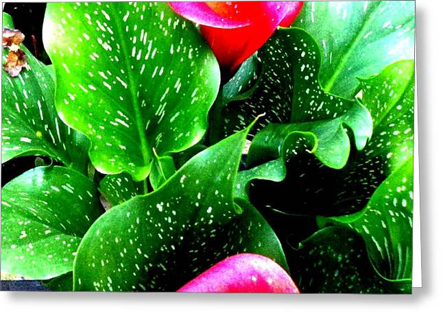Tropical Leaves Greeting Card by Marianne Dow