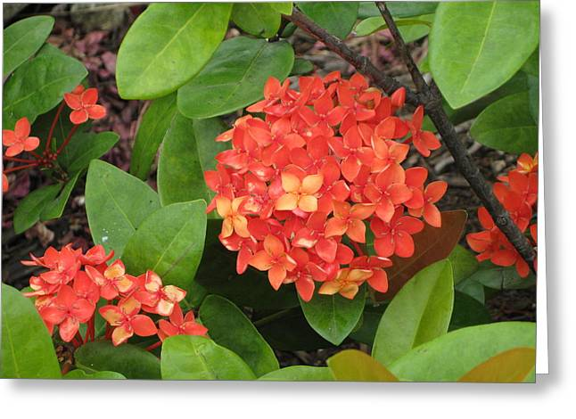 Greeting Card featuring the photograph Tropical Orange Flower by Judy Palkimas