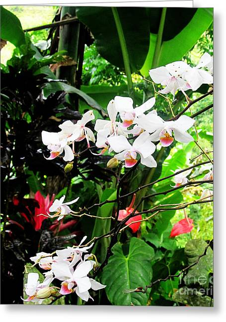 Tropical Orchids Greeting Card by Tina M Wenger