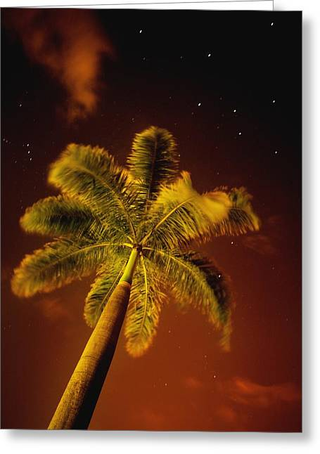 Tropical Palm Tree At Night Greeting Card by Darren Greenwood