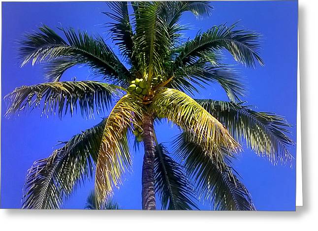 Tropical Palm Trees 8 Greeting Card