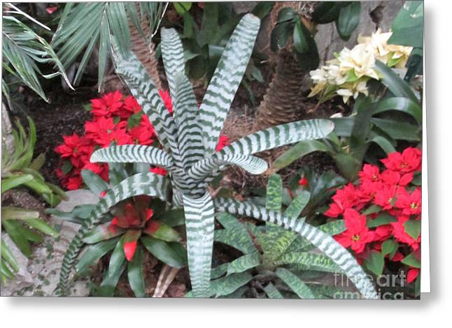 Tropical Plant And Flowers Greeting Card by Nancy Rucker