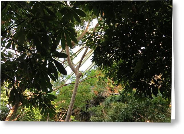 Tropical Rain Forest Waterfall Greeting Card by Elisabeth Ann