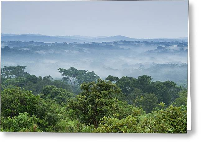 Tropical Rainforest Kibale Np Western Greeting Card by Sebastian Kennerknecht